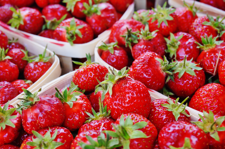strawberry u-pick picking moncton new brunswick