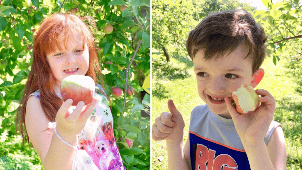 where to go apple picking in new brunswick with kids