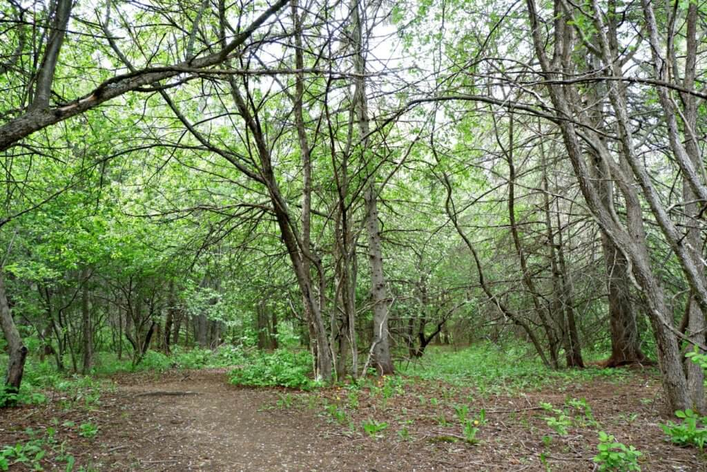 grove hamlet moncton riverview dieppe best playground park pickle planet walking
