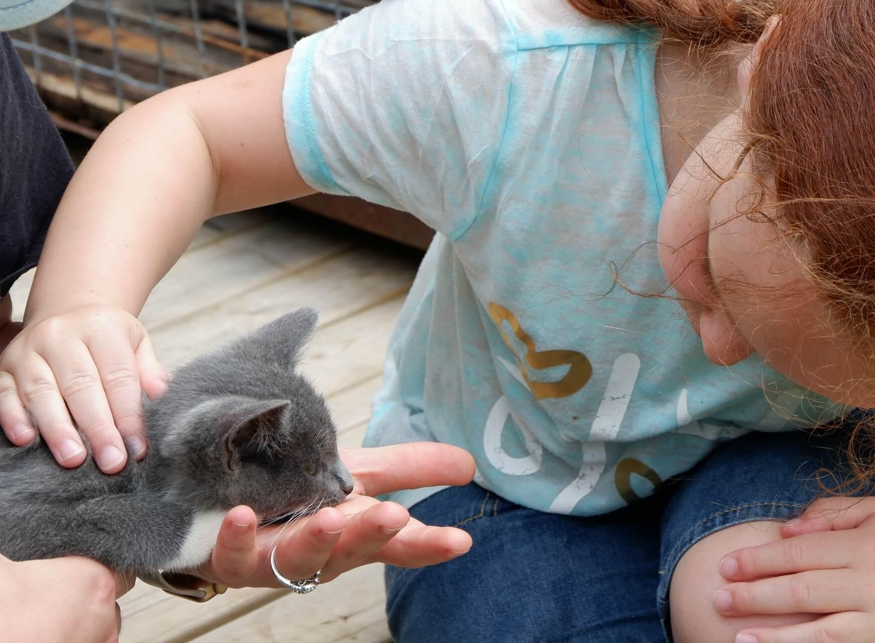 free things moncton kids family pet spca