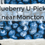 blueberry u-pick moncton Blueberry u pick Moncton Dieppe riverview pickle planet high bush low wild u-pick blueberries south eastern new brunswick