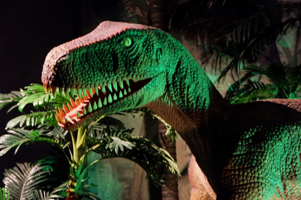march break downtown halifax dinosaurs museum natural history must visit kids family vacation