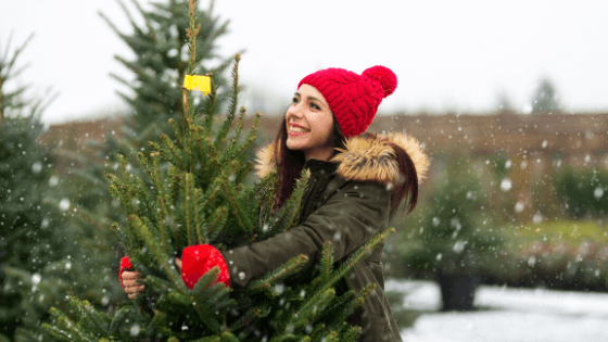 where to cut your own christmas tree in new brunswick u-pick u-cut farm photo by piksel via Getty Images via Canva
