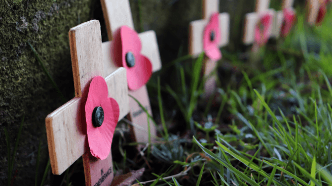 remembrance day moncton pickle planet crafts activities resources information