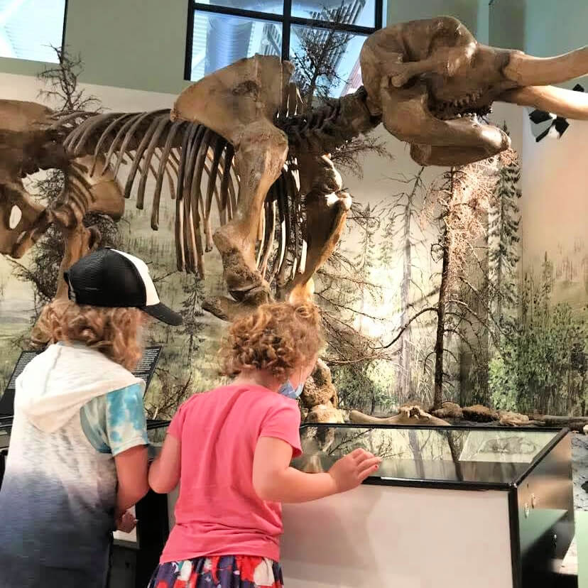 hilsborough mastodon albert county new brunswick museum 101 things to do with kids ideas family day trip staycation