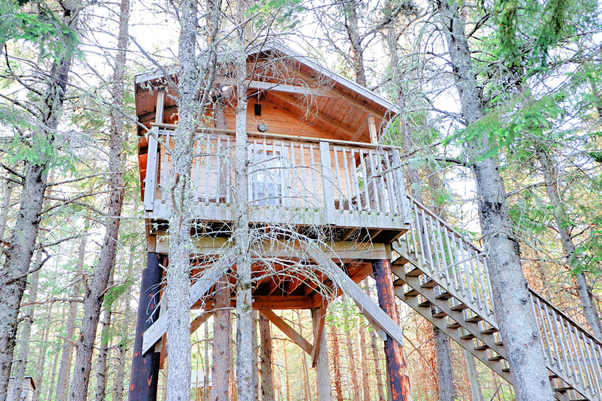 treehouse camping miramichi with kids things to do in new brunswick summer staycation ideas