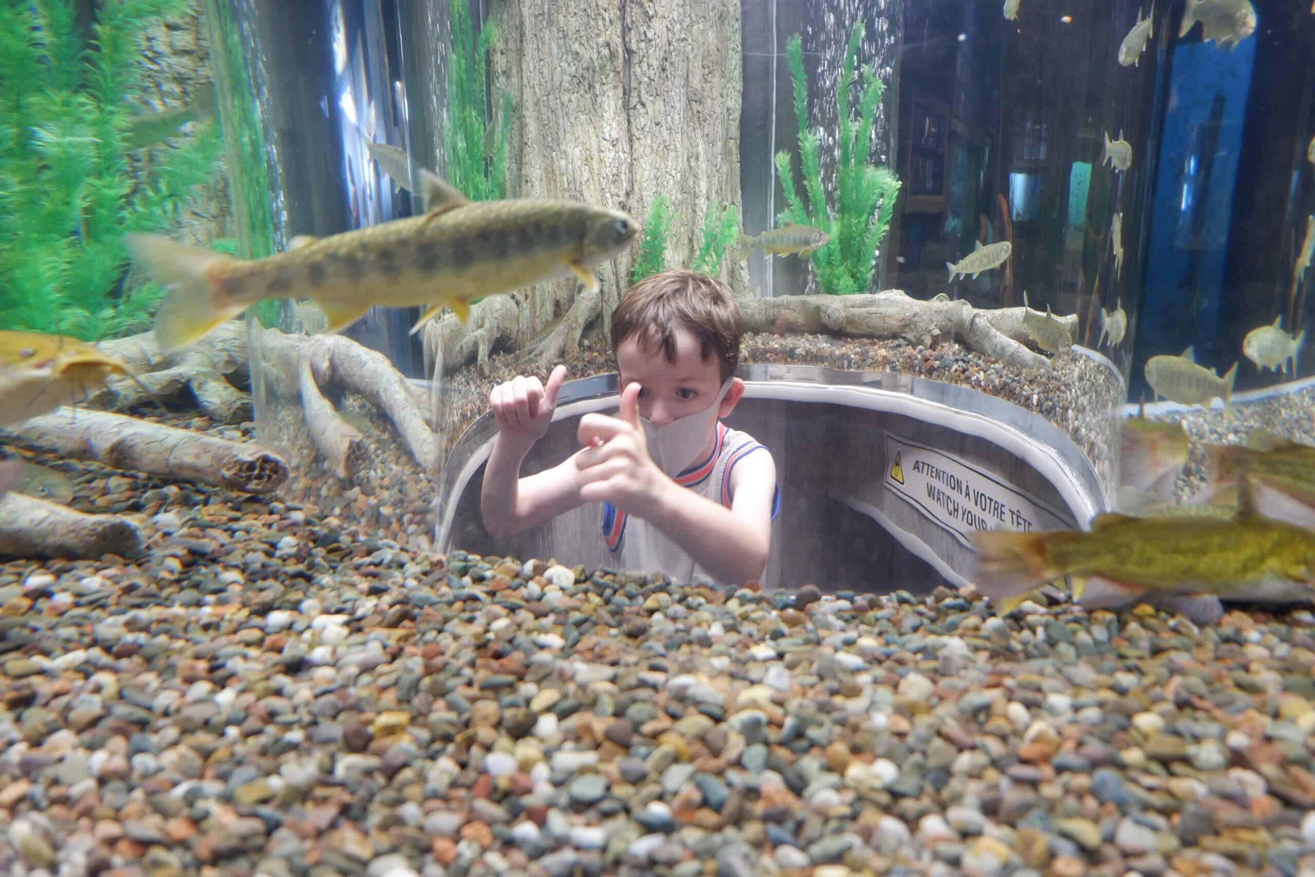 child inside 360 degree viewing tank at new brunswick aquarium