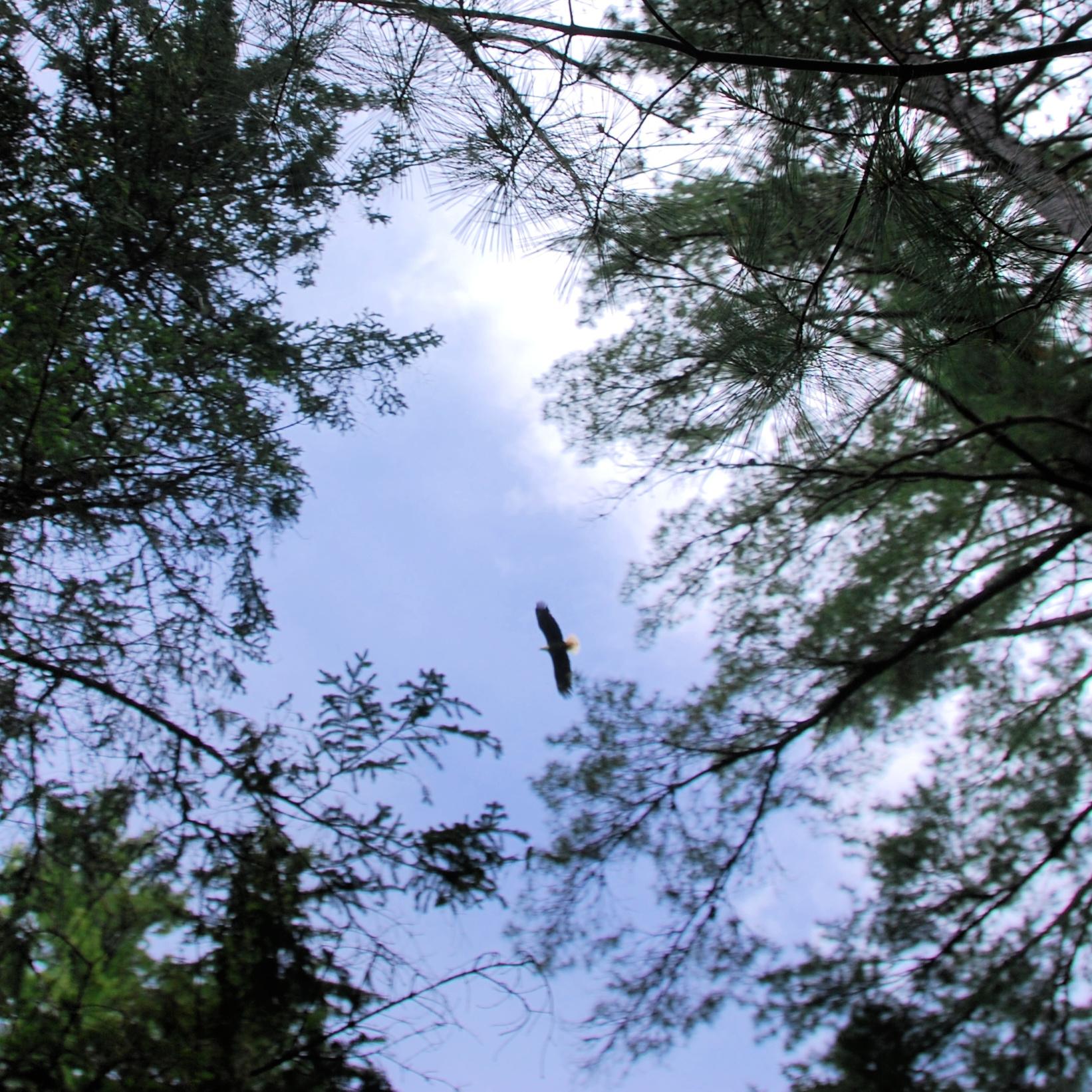 beaubears island pickle planet eagle